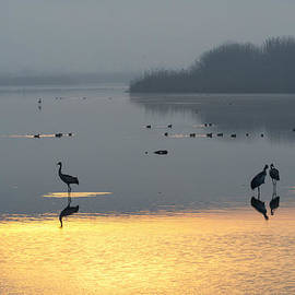 Dubi Roman - Sunrise at the Hula Valley Israel 1