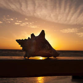 Jean Noren - Sunrise Conch