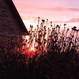 Tina M Wenger - Sunrise Garden And Barn