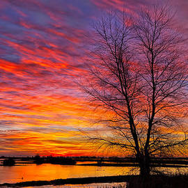 Kathleen Bishop - Sunrise in the Sacramento Valley