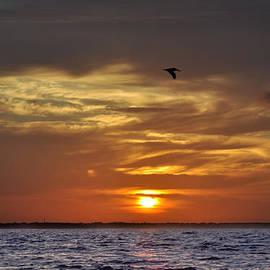 Bill Cannon - Sunrise on Tampa Bay