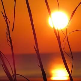 Nikki McInnes - Sunrise Plant