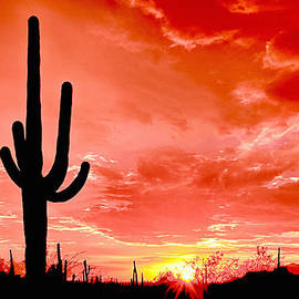 Bob and Nadine Johnston - Sunrise Saguaro National Park