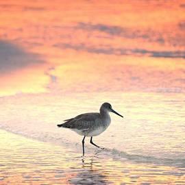 Henry Kowalski - Sunrise Shorebird