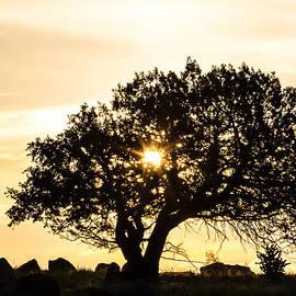 Renny Spencer - Sunrise Silhouette 7-2-14