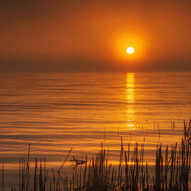 Scott Norris - Sunrise Through the Fog