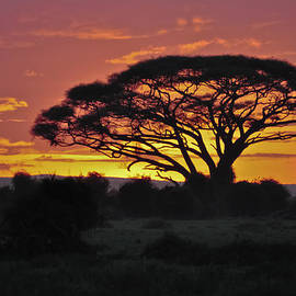 Beth Wolff - Sunset  Africa Safari