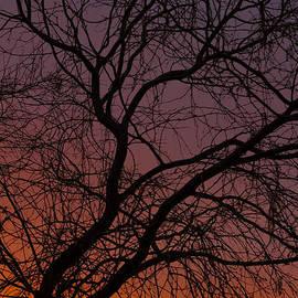 Ed  Cheremet - Sunset Beauty.