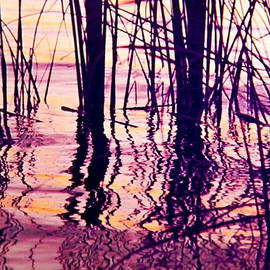 Christy Usilton - Sunset Cattails