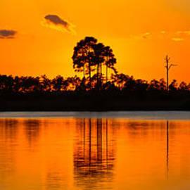David Berg - Sunset Cypress