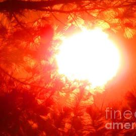 Tina M Wenger - Sunset On Balsam Leaves