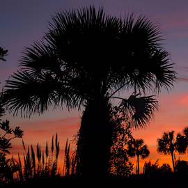 Evie Carrier - Sunset Palms