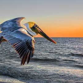 Brian Tarr - Sunset Pelican