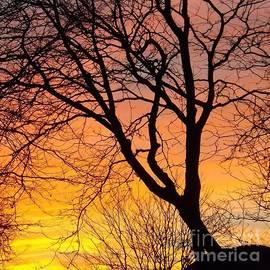 Sara  Raber - Sunset Silhouette
