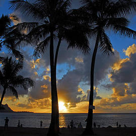 Lynn Bauer - Sunset Silhouettes