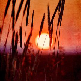 Fran Riley - Sunset Spider