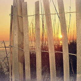 Toni Abdnour - Sunset Through A Fence