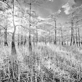 Bradley R Youngberg - Sunset Through Cypress