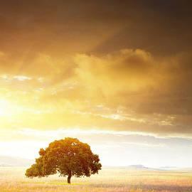 Carlos Caetano - Sunset Tree