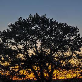 Pamela Schreckengost - Sunset Tree