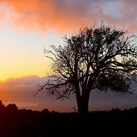 Venetia Featherstone-Witty - Sunset Tree In Maui
