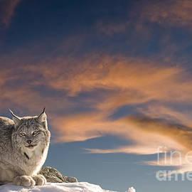 Wildlife Fine Art - Sunset Warmth