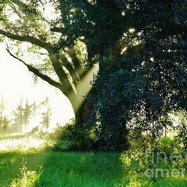 D Hackett - Sunshine And Sunbeams