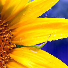 Karen Wiles - Sunshine Blue
