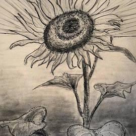 Jose A Gonzalez Jr - Sunshine Flower