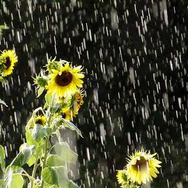 Elizabeth Sullivan - Sunshine in the Rain