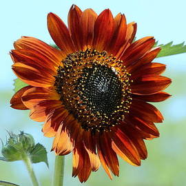 Rosanne Jordan - Sunshine Sunflower
