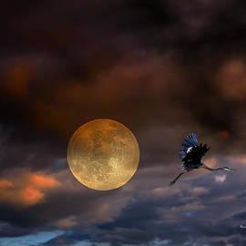 Angela A Stanton - Super Moon 2013