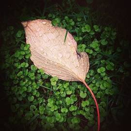 October Glow Photography - Wet Leaf Resting