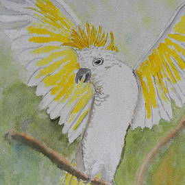 Pamela  Meredith - Suphar Crested Cockatoo
