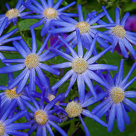 Matthew Bamberg - Surreal Flowers