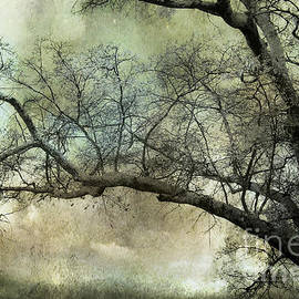 Kathy Fornal - Surreal Gothic Dreamy Trees Nature Landscape