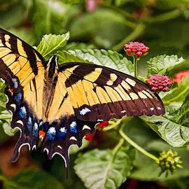 Penny Lisowski - Swallowtail Beauty