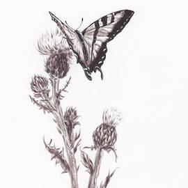Heather Stinnett - Swallowtail Butterfly