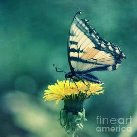 Priska Wettstein - Swallowtail