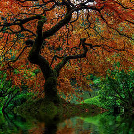 Wes and Dotty Weber - Swamped Japanese Maple D2422