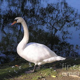 Kerstin Ivarsson - Swan by a lake