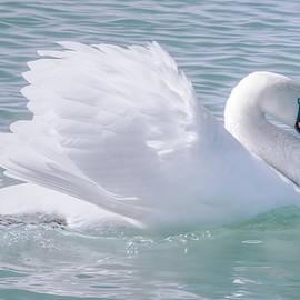 LeeAnn McLaneGoetz McLaneGoetzStudioLLCcom - Swan Courting