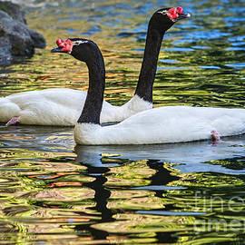 Jamie Pham - Swan Lake