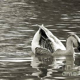 Robyn King - Swan Lake Monochrome Digital Art