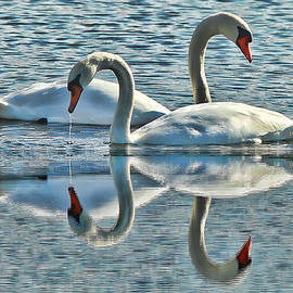 Andrea Kollo - Swan Love