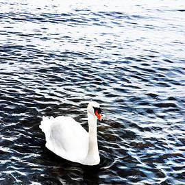 Mark Rogan - Swan