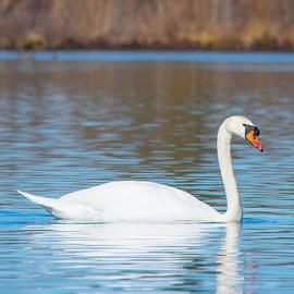 Parker Cunningham - Swan on a Lake