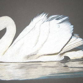 Margaret Riley - Swan on Black