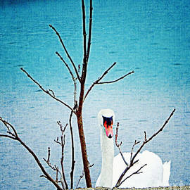 Bobbee Rickard - Swan Peek A Boo