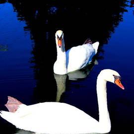 Earl  Eells a - Swan Pond by Earl